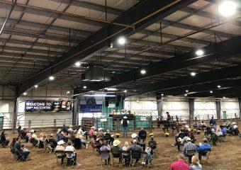 Livestock Auctions